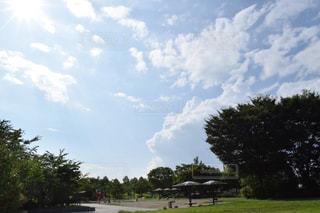 フィールドの大木の写真・画像素材[706243]