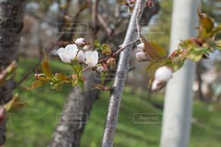 春の写真・画像素材[323361]
