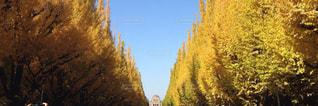 秋の写真・画像素材[411656]