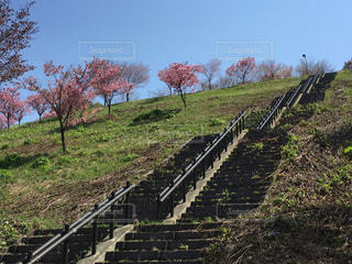 春の写真・画像素材[461498]