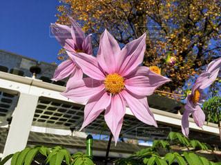 近くの花のアップの写真・画像素材[878608]