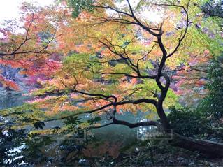 新宿御苑の写真・画像素材[878610]