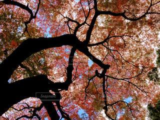 近くの木のアップの写真・画像素材[878619]
