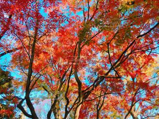 近くの木のアップの写真・画像素材[889886]