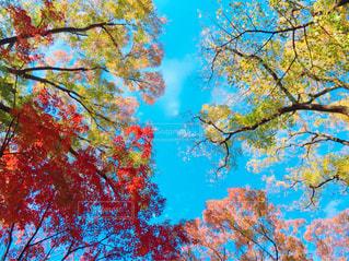 近くの木のアップの写真・画像素材[889887]