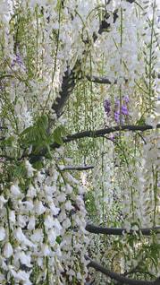 木の枝に花の花瓶の写真・画像素材[1167003]