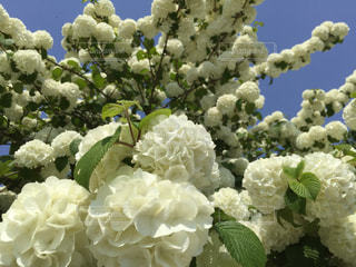 近くの花のアップの写真・画像素材[1167005]