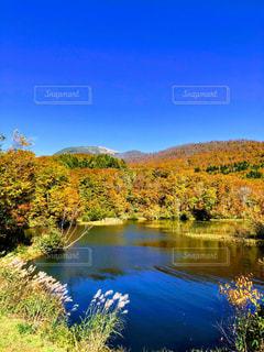 木々 に囲まれた沼の写真・画像素材[1561565]