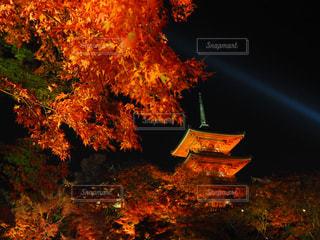 秋の写真・画像素材[324032]