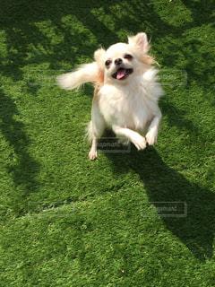 犬の写真・画像素材[324678]