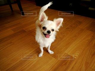 犬の写真・画像素材[324687]