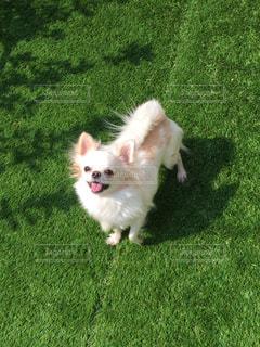 犬の写真・画像素材[324709]
