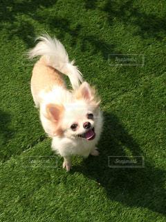 犬の写真・画像素材[324711]