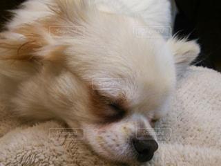 犬の写真・画像素材[324921]