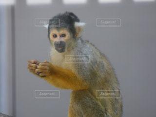 動物の写真・画像素材[324942]