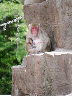 猿の写真・画像素材[324953]