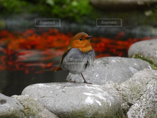 鳥の写真・画像素材[324966]