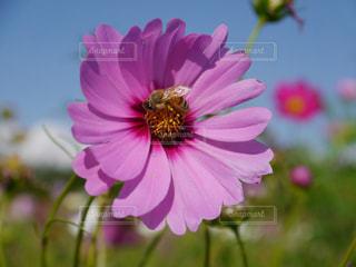 花の写真・画像素材[325006]