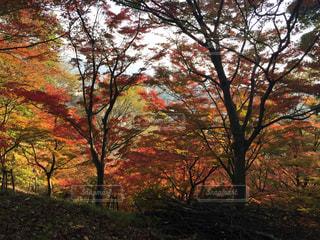 秋の写真・画像素材[326072]