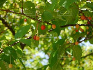 自然の写真・画像素材[326222]