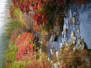 自然の写真・画像素材[326274]