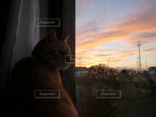 猫の写真・画像素材[326817]