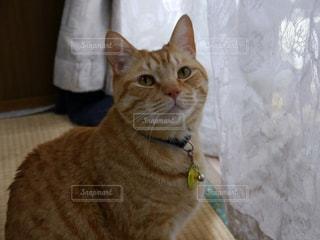 猫の写真・画像素材[326842]