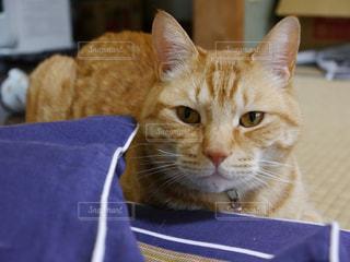 猫の写真・画像素材[326845]