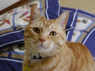 猫の写真・画像素材[326848]