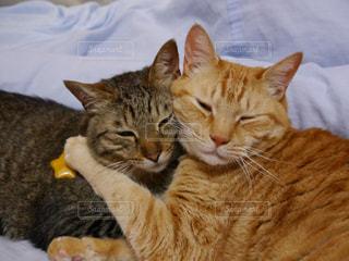 猫の写真・画像素材[326850]
