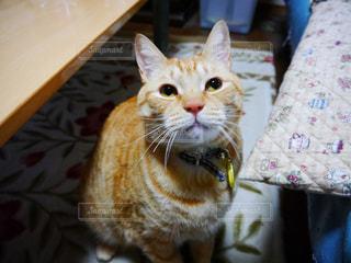 猫の写真・画像素材[326856]