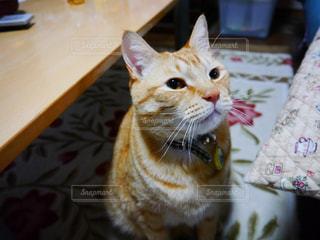 猫の写真・画像素材[326857]