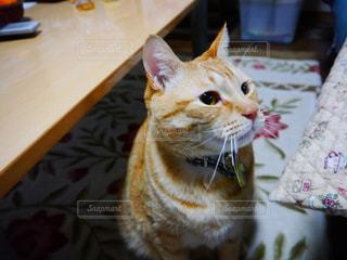 猫の写真・画像素材[326858]