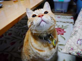 猫の写真・画像素材[326859]