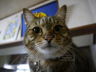 猫の写真・画像素材[326863]