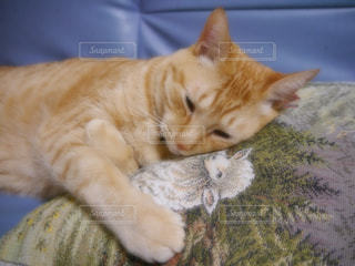 猫の写真・画像素材[326864]