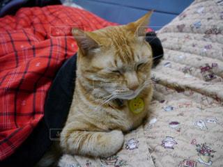 猫の写真・画像素材[326866]