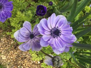 花の写真・画像素材[331240]