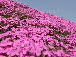 花の写真・画像素材[332180]