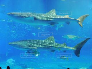 水族館の写真・画像素材[332925]