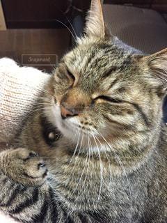 猫の写真・画像素材[346381]