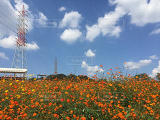 近くの花のアップの写真・画像素材[731236]