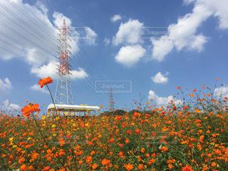 近くの花のアップの写真・画像素材[731237]