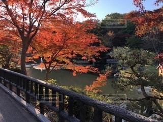 川以上の長い橋の写真・画像素材[919742]