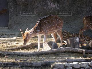 石の壁の横に立ってをキリンのグループの写真・画像素材[919756]
