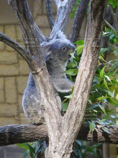 枝の上に座って鳥の写真・画像素材[919780]