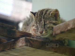 木製テーブルの上に横になっている猫の写真・画像素材[1186365]