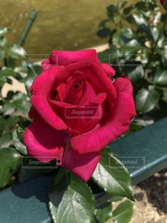 近くの花のアップの写真・画像素材[1186373]