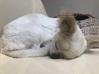 ベッドの上に横たわっている猫の写真・画像素材[2171018]