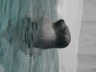 滝のクローズアップの写真・画像素材[2171019]